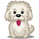 resim/avatar/dog-einstein-icon.png